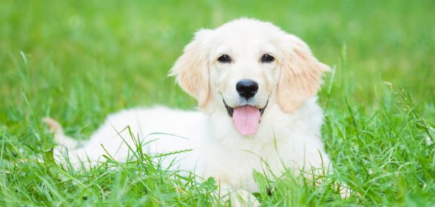 تفسير رؤية الكلب في المنام ومعناه مفسر