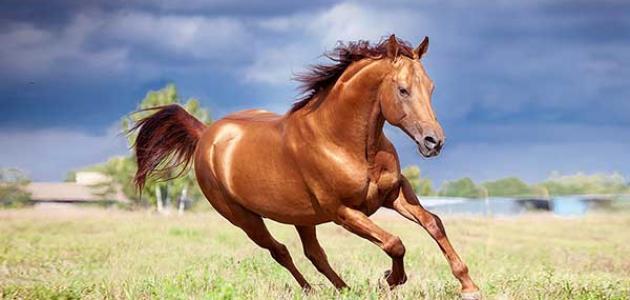 تفسير رؤية الحصان في المنام لابن سيرين مفسر