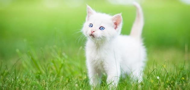 ما تفسير رؤية القطط في المنام ومحاولة اخراجها من البيت