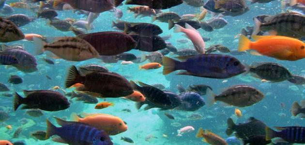 تفسير حلم السمك للرجل المتزوج