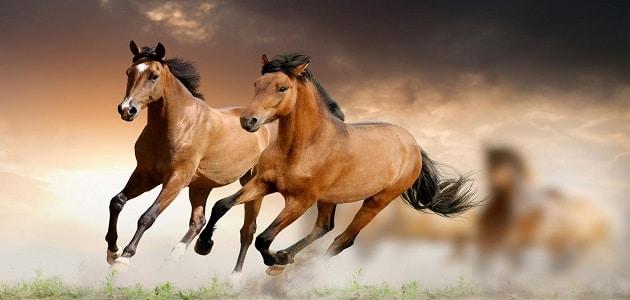 تفسير رؤية الحصان الهائج