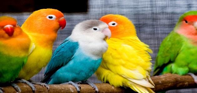 رؤية العصافير في المنام للمتزوجة