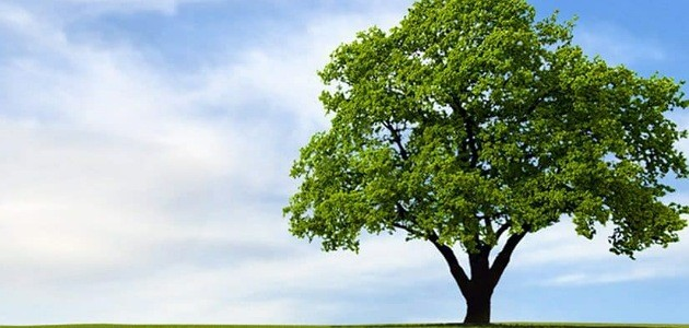رؤية جذع الشجرة في المنام
