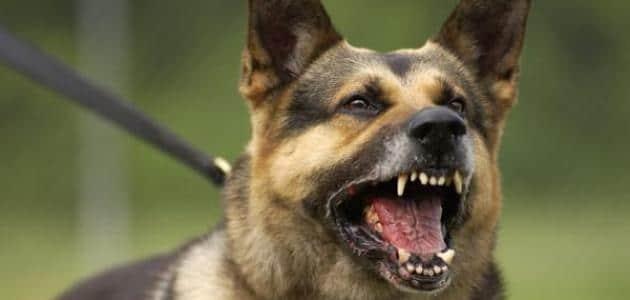 مطاردة الكلاب في المنام للعزباء والمتزوجة والحامل